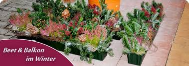 pflanzen fã r den balkon balkon kräuter im winter 16 14 17 egenis inspirierend