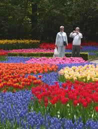 Netherlands Tulip Fields Tulip Fields Richard Tulloch U0027s Life On The Road