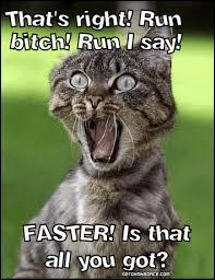 Run Bitch Run Meme - that s right run bitch