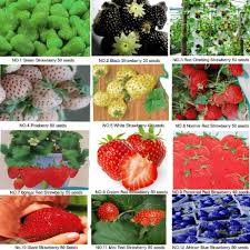 garden plants cheap sell 6 kinds of different strawberry seeds