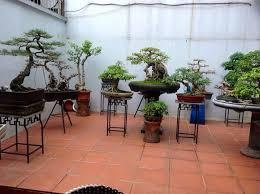 135 best bonsai display ideas images on pinterest bonsai