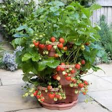ornamental garden plants ornamental plants ornamental plants