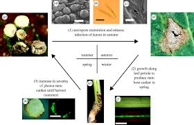Viral Disease In Plants Page 489 Range And Severity Of A Plant Disease Increased By Global Warming