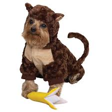Banana Halloween Costume Monkey Dog Halloween Costume Banana Puppydazzles U0027s Weblog