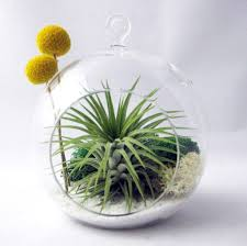 home decoration attractive hanging air plant terrarium in sphere