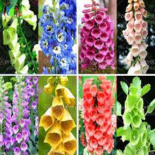 lantern flower aliexpress buy 200pcs bag fuchsia seeds fuchsia flowers