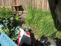 small backyard clean up u0026 garden design in chicago 4 seasons