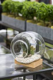 5 easy indoor garden ideas small space ideas