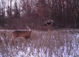 Bow Ground Blind Late Season Deer Hunting Tactics Legendary Whitetails