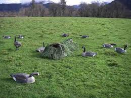 Goose Layout Blind Canada Goose Hunt Tod U0027s Blog