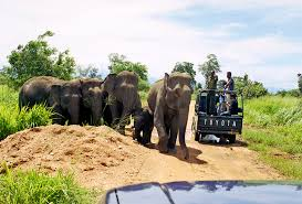 wildlife tours images Wildlife tours in sri lanka travel with kamaltravel with kamal jpg