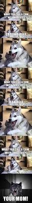 Funny Husky Memes - 42 memes that can make you cry out of laughter funny memes