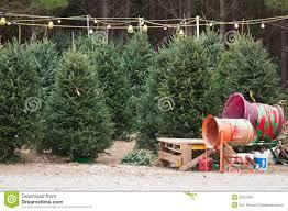 natural christmas trees sale christmas trees 2017