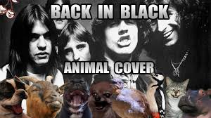 Acdc Meme - ac dc back in black animal cover youtube