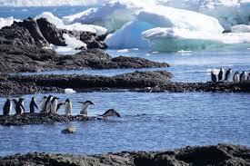 antarctica fieldwork detroit zoo