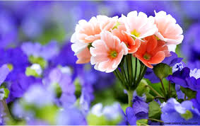 flower wallpaper hd flower wallpaper widescreen all wallpaper