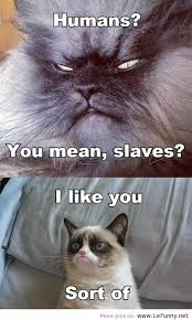 Mean Cat Meme - idk why this makes me laugh but it does too darn cute pinterest