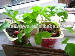 mini garden mini plant mama indoor vegetable garden 6 kinds