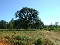portland native plant list native white oak habitat west multnomah soil u0026 water