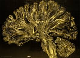 light up your brain giant artwork reflects the gorgeous complexity of the human brain