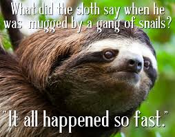 Sloth Jokes Meme - slow motion sloths pinterest sloth and animal