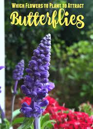 butterfly garden for raising eco friendly kids