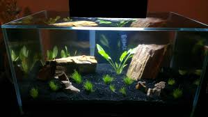 Fluval Edge Aquascape Fluval Edge 6 Gallons Album On Imgur