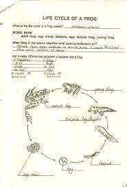 Virtual Frog Dissection Worksheet Hess Amphibians