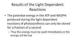 What Happens During The Light Dependent Reactions Of Photosynthesis Light Independent Reactions Of Photosynthesis