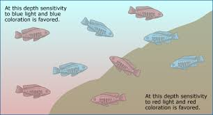 speciation and fishy physics