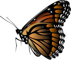 butterfly png image free picture download