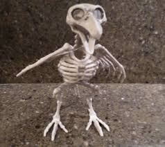 Halloween Skeleton Prop by 1 Grey Skeleton Bird Prehistoric Halloween Prop Spooky Home Decor