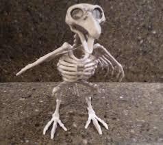 1 grey skeleton bird prehistoric halloween prop spooky home decor