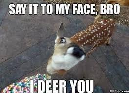 Deer Meme - i deer you jpg 491 356 recipes pinterest funny deer meme