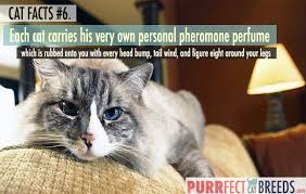 Cat Facts Meme - cat facts 6 each cat carries his own personal perfume purrfect