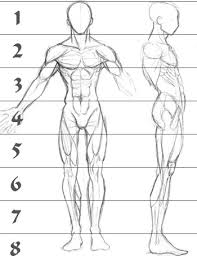 Anatomy Of Human Body Sketches A Sketch Of Human Male Anatomy From The Front And Right Side With
