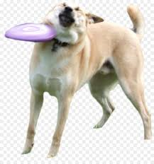 Know Your Meme Dog - shiba inu doge flying discs know your meme disc dog doge png