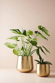 Indoor Planter Pots by Shop Pots U0026 Planters Indoors Garden Or Outdoors Anthropologie
