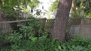 blogging in the backyard jupiterjenkins com