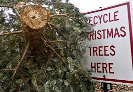 christmas trees will be collected for mulch in winston salem