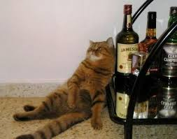 Drunk Cat Meme - drunk cat