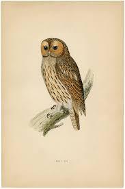 8 best images of free vintage printable owls free vintage