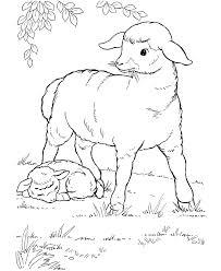 baby sheep coloring pages vbs sheep sheep baby
