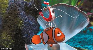 finding nemo true researchers young clownfish travel