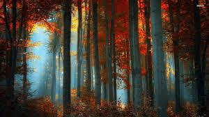100 hdq autumn forest wallpapers desktop 4k hd backgrounds
