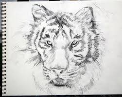 tiger sketch 2 by artyshazzie on deviantart