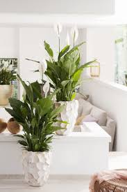 plantes d駱olluantes chambre chambre plantes dépolluantes pour maison plante plantes qui plante
