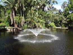 Botanic Gardens Brisbane City Brisbane City Botanical Gardens Frank Donnis Travel The