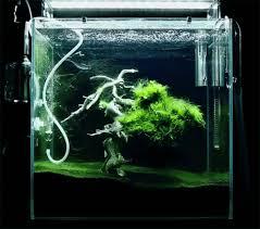 wallpaper ikan bergerak untuk pc download wallpaper ikan bergerak dalam aquarium gambar lucu gif