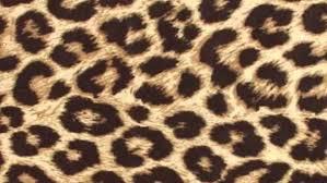 animal print wallpaper zellox arafen